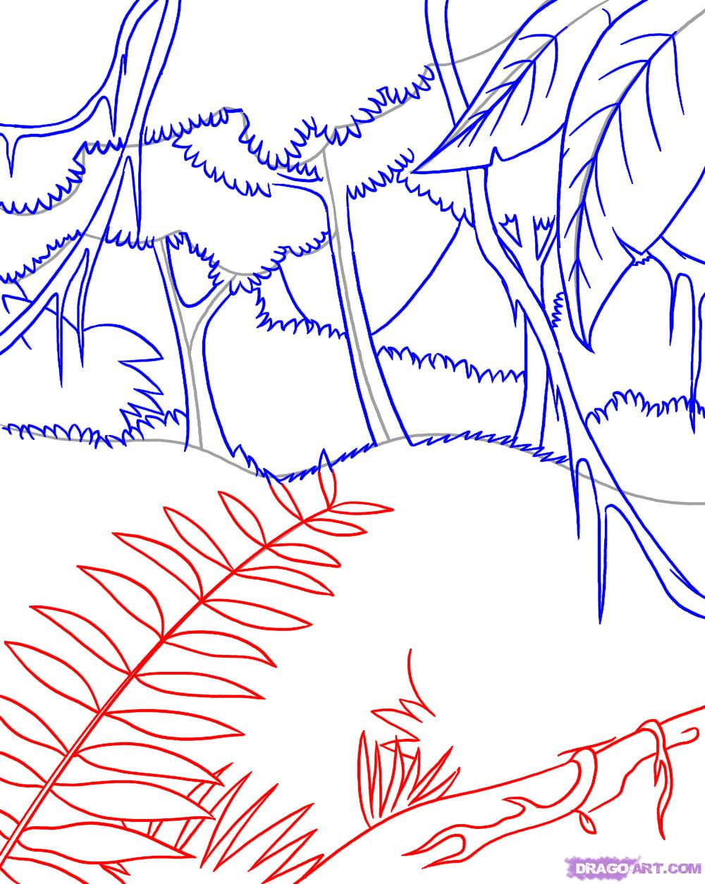 Drawn rainforest To  Draw a Rainforest