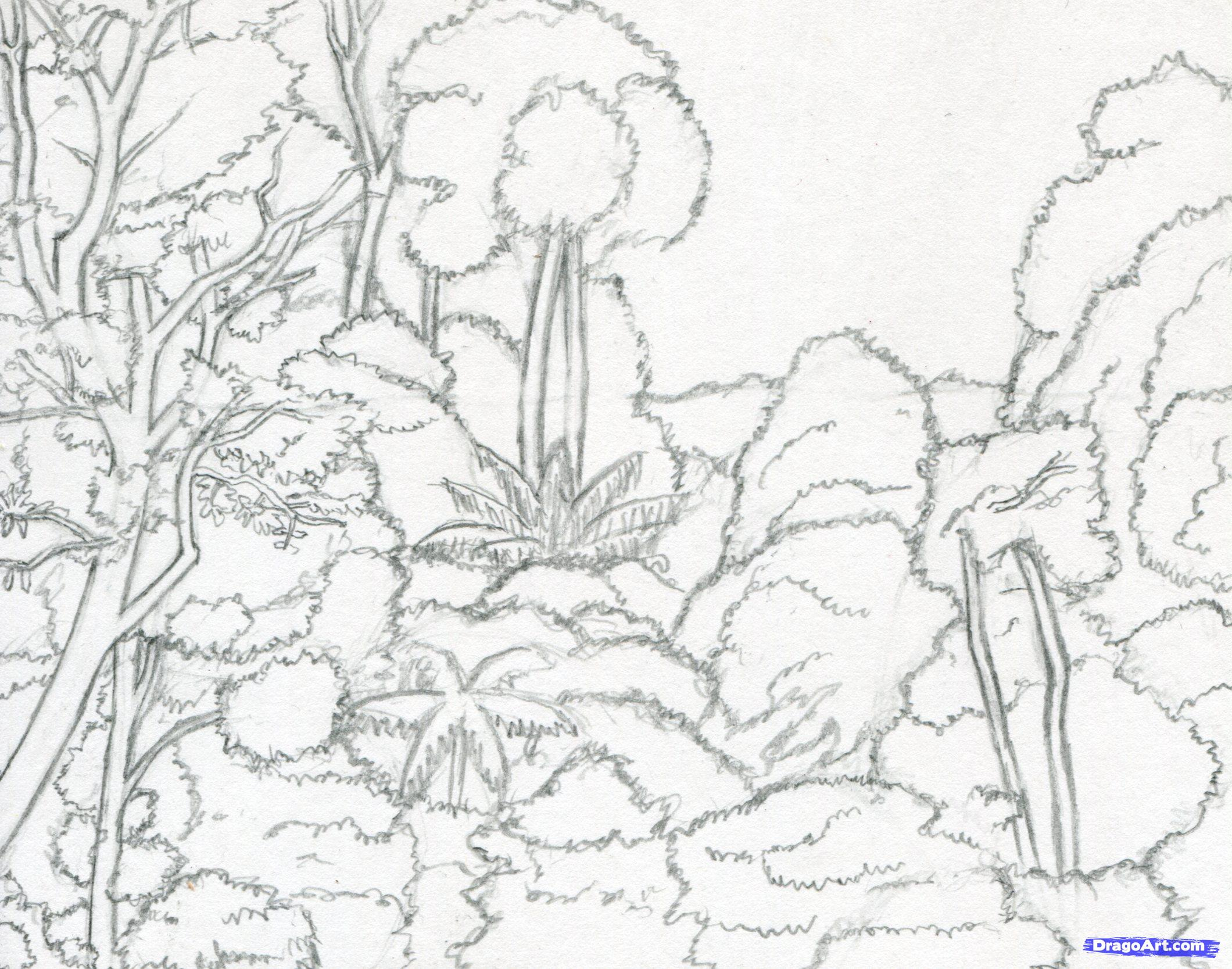 Drawn rainforest Tropical Rainforest Drawing Drawing