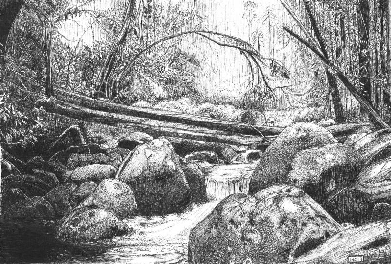 Drawn rainforest WetCanvas  Drawing Rainforest