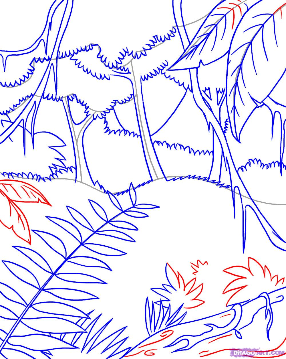 Drawn rainforest amazon forest A Landscapes step Step to