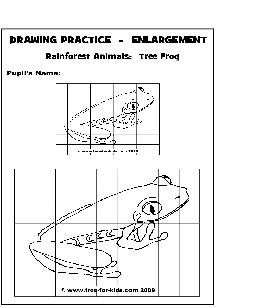 Drawn rainforest art ks2 Frog Pages Page Drawing Drawing