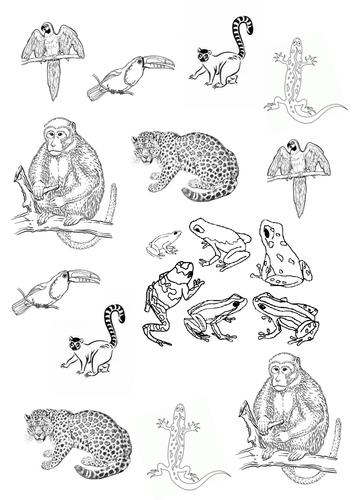 Drawn rainforest art ks2 Rainforest D Pictures Pictures Teaching