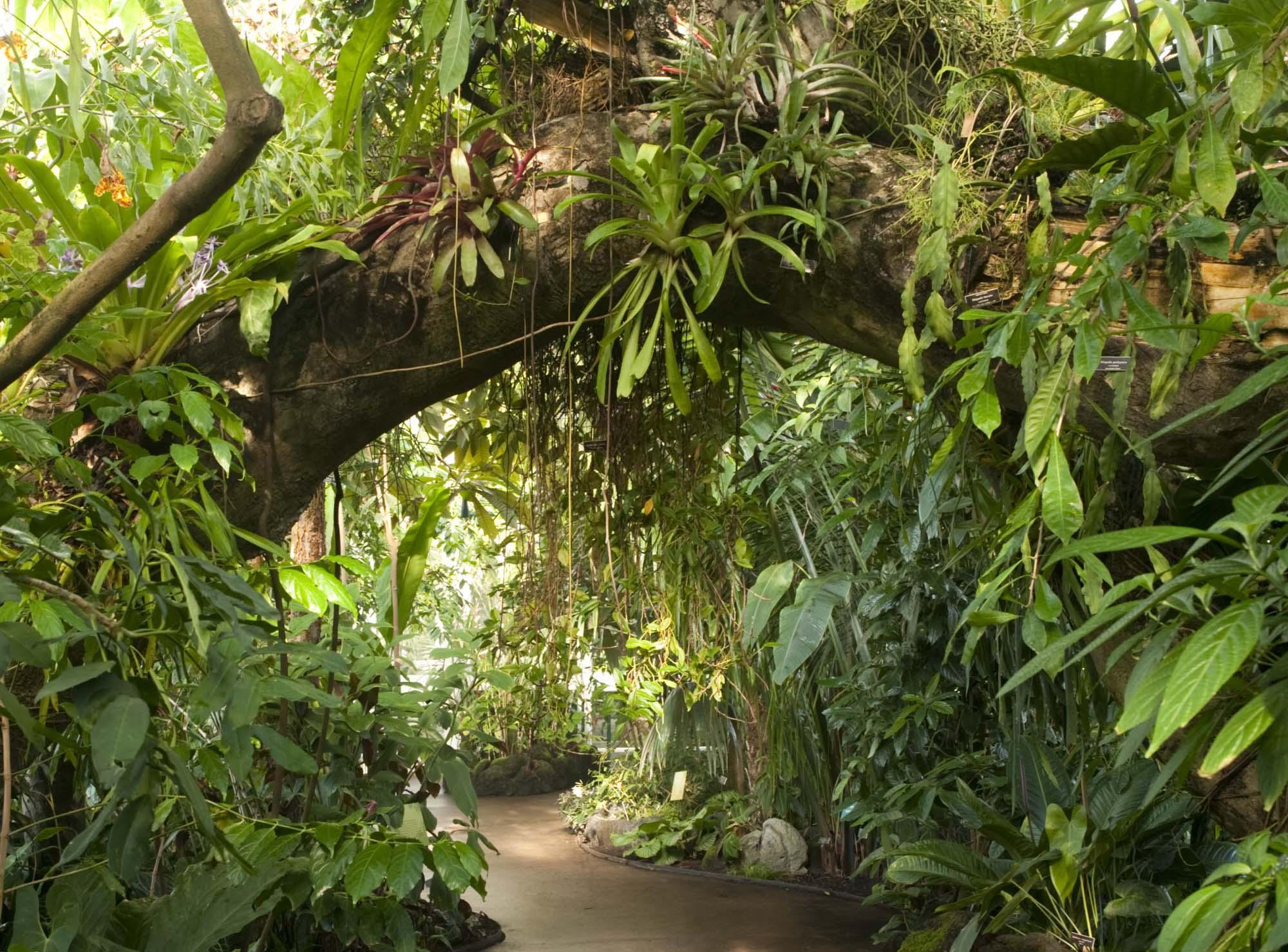 Drawn palm tree rainforest tree #13