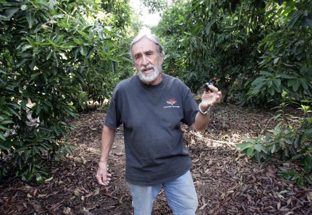 Drawn rainforest avocado tree Owner  Rancho growers the
