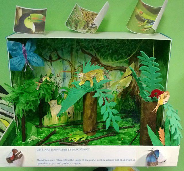 Drawn rainforest collage ks2 Rainforest on dioramas old often
