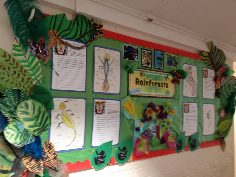 Drawn rainforest display ks2 Class animals forest Rainforests display