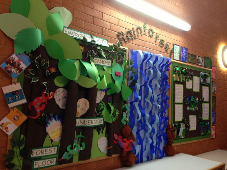 Drawn rainforest display ks2 19 images on Displays display