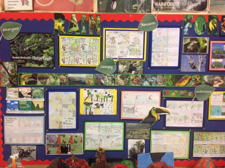 Drawn rainforest display ks2 Display Ideas Teaching Rainforests Rainforests