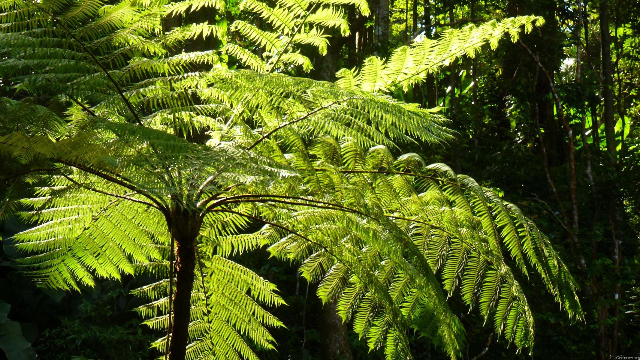 Drawn rainforest fern tree Holly PDF Northern for 2007