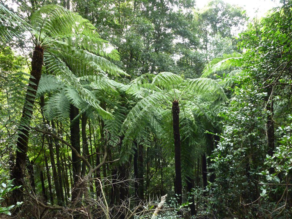 Drawn rainforest fern tree Rainforest  walking to Ruined
