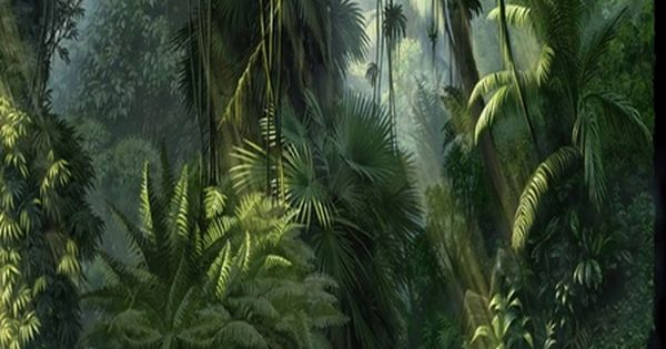 Drawn rainforest fern tree Jungle drawing Live fantasy I