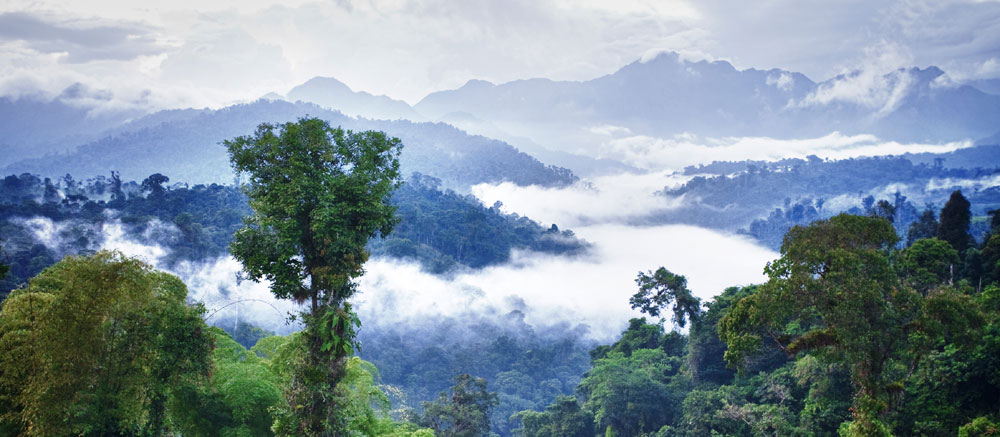 Drawn rainforest forest floor  earth's effects importance cloud