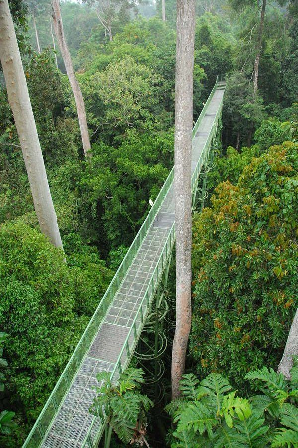Drawn rainforest forest river At Borneo Pinterest in Centre