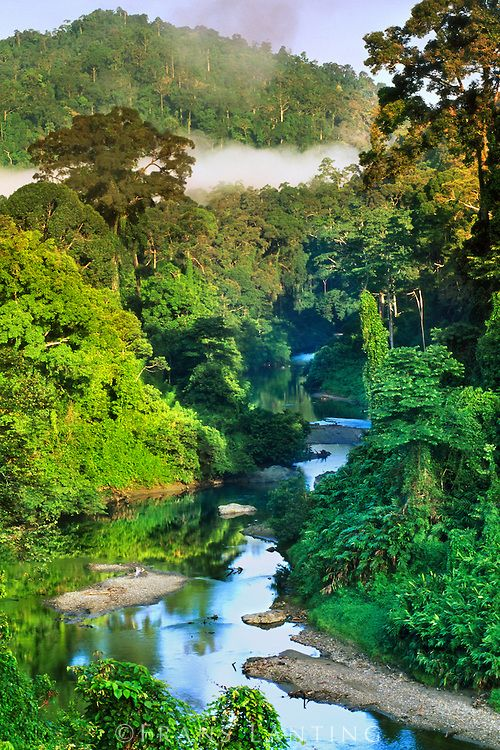 Drawn rainforest forest river Plants on ideas the of