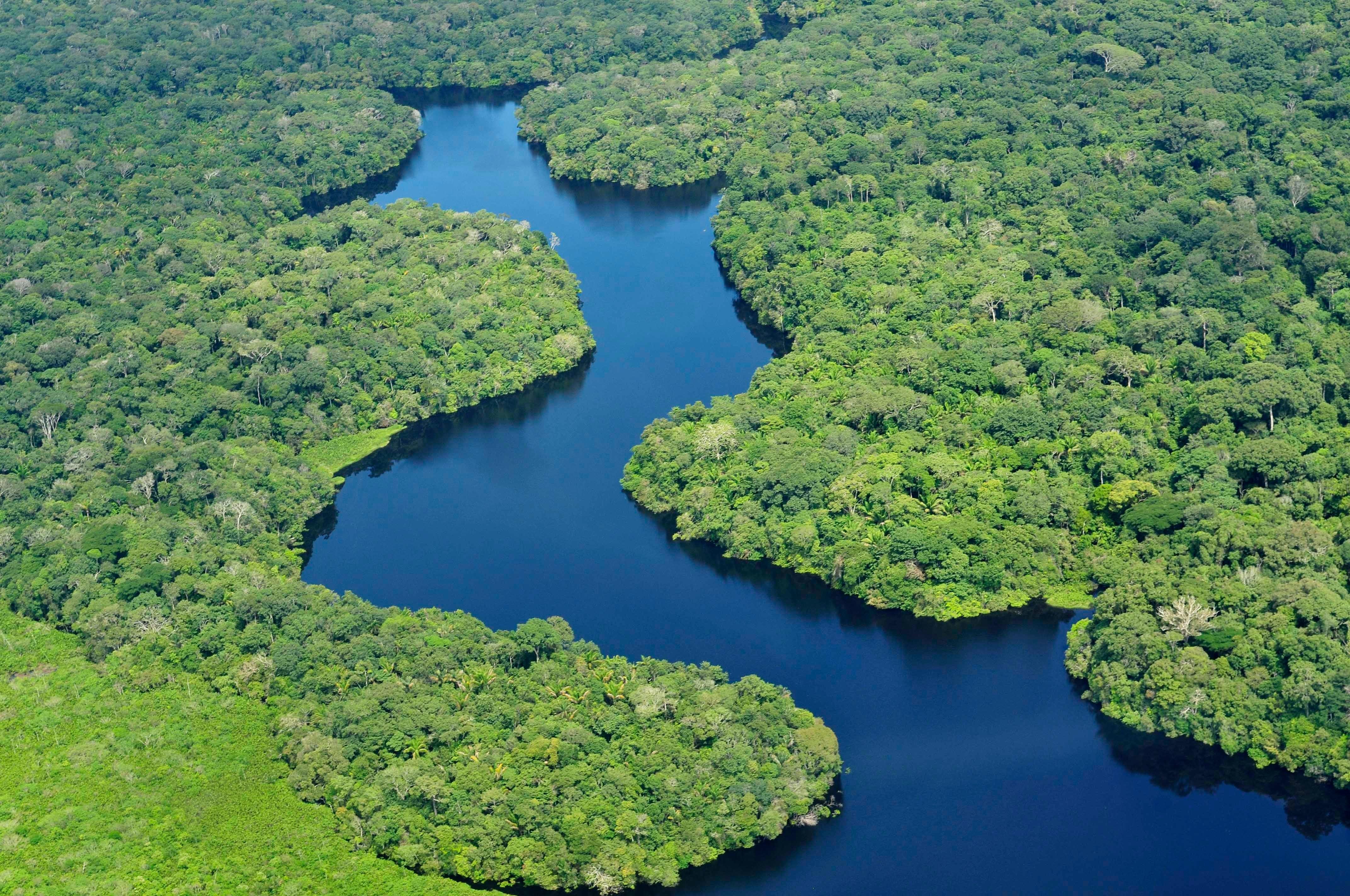 Drawn rainforest forest river The & Games Rainforest Rainforest