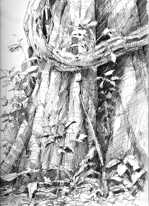 Drawn rainforest jungle Drawing Motmot The a This