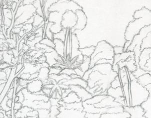 Drawn rainforest jungle Step Draw  How Rainforest