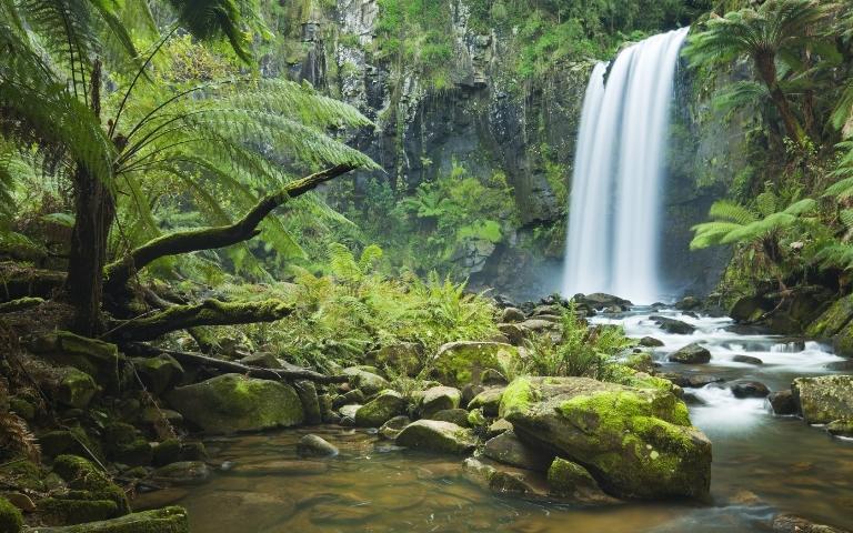 Drawn rainforest jungle landscape Step COM step jungles ARCMEL