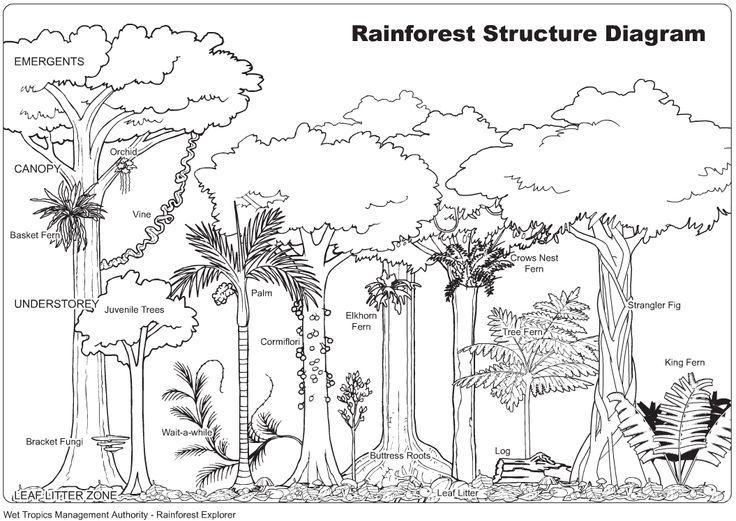 Drawn rainforest jungle landscape Drawings source about Rainforest images