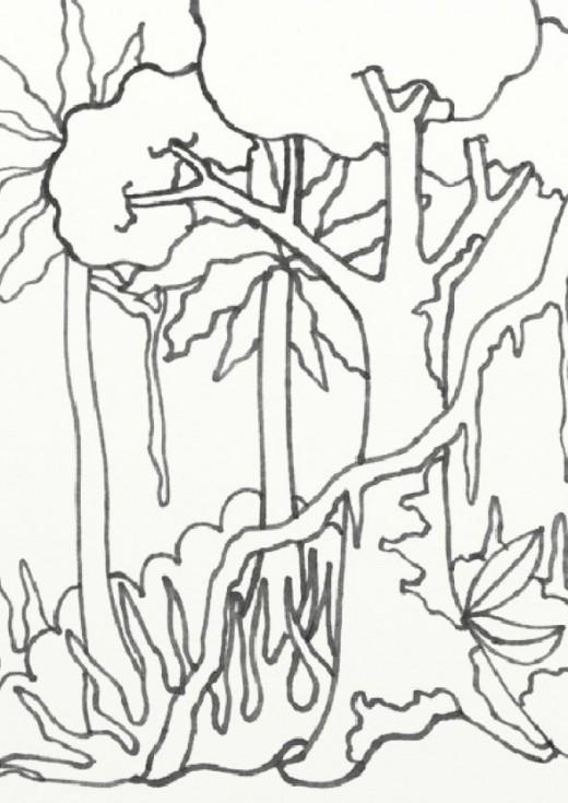 Drawn rainforest jungle scenery  coloring amazon treasures coloring