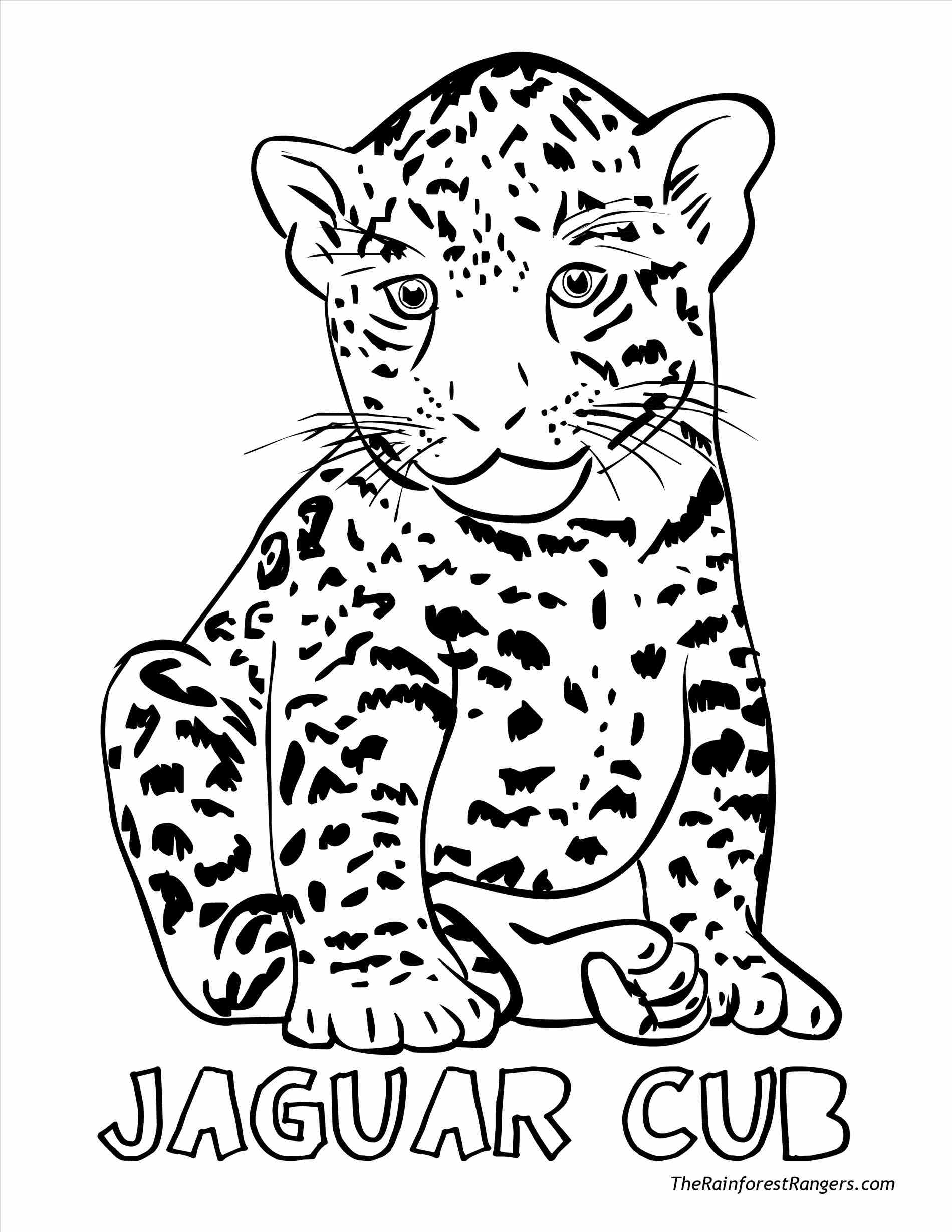 Drawn rainforest north america African Coloring Pages Animals Best