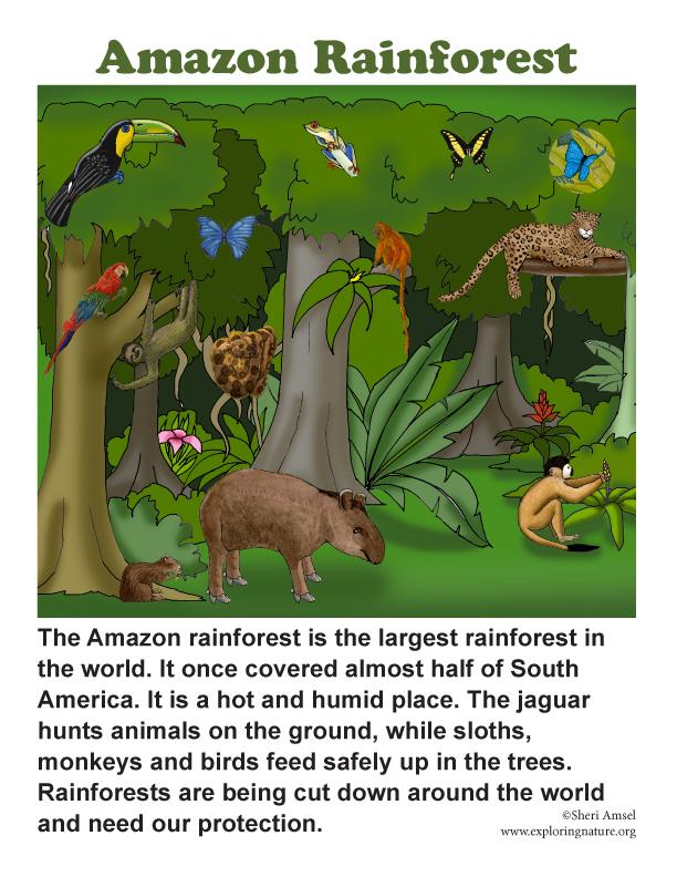 Drawn rainforest north america Posters Amazon  Rainforest