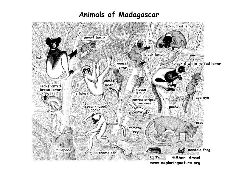 Drawn rainforest north america Plants Madagascar and Rainforest Rainforest