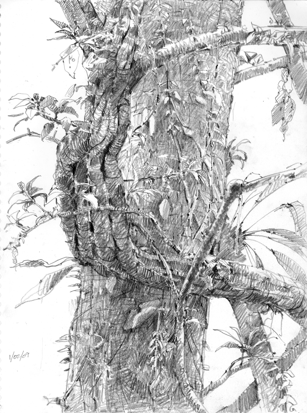 Drawn rainforest pen and ink Drawings of life some –