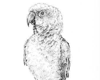 Drawn rainforest pen and ink Exotic bird ink bird bird
