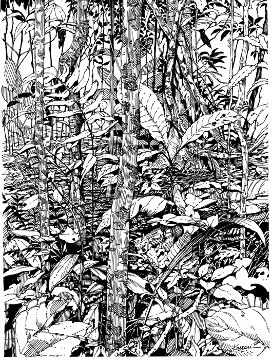 Drawn rainforest pen and ink And Motmot The – Air