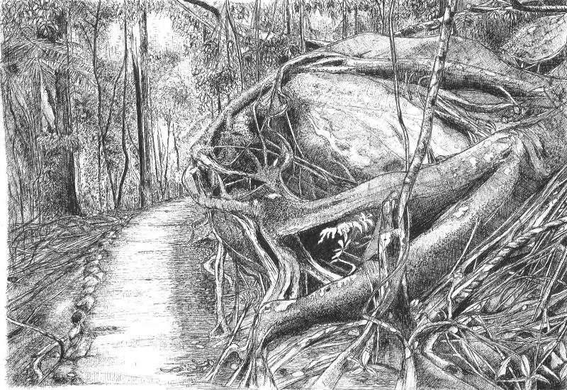 Drawn rainforest pen and ink The later series hopes year