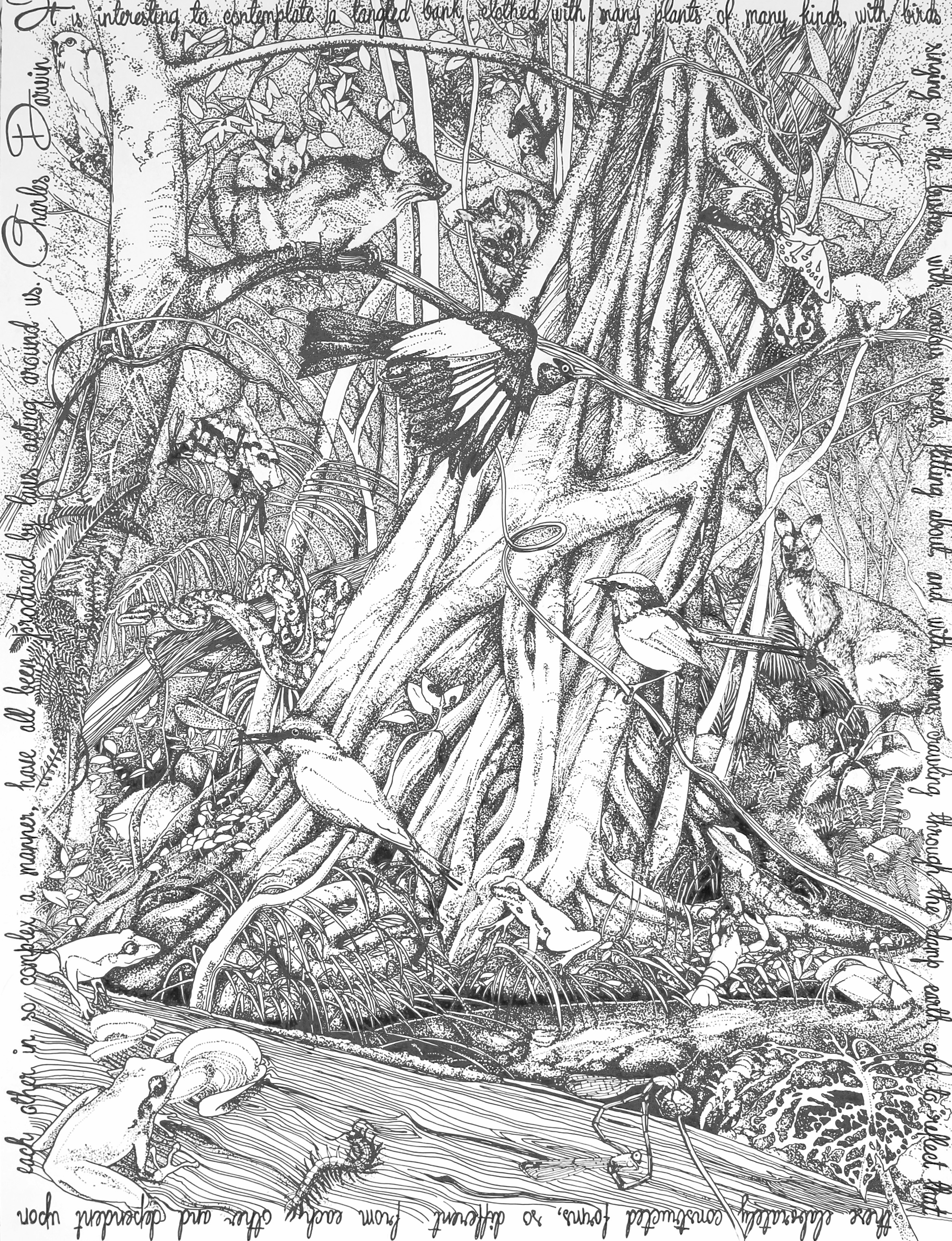 Drawn rainforest pen and ink Cms paper Canson on and