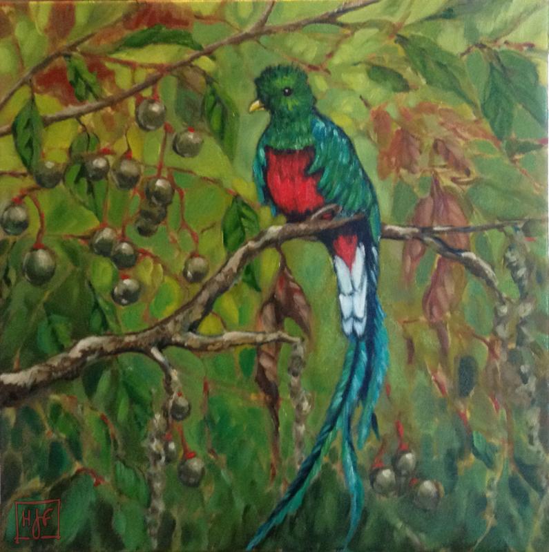 Drawn rainforest quetzal Extraordinary bird bird exotic Green