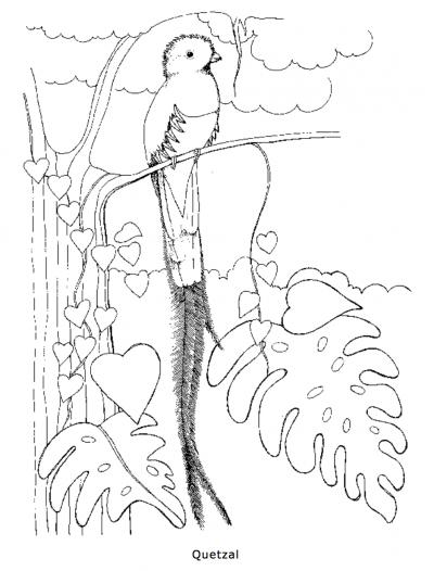 Drawn rainforest quetzal Quetzal Page Page PDF Coloring