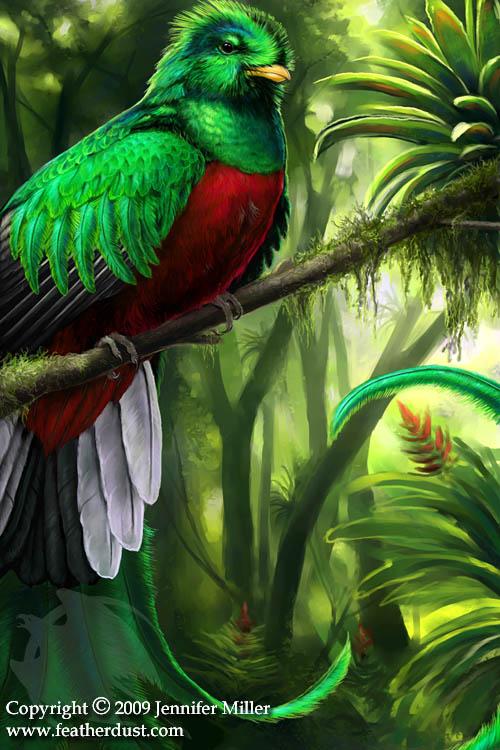 Drawn rainforest quetzal Magolobo quetzal 126 Resplendent DeviantArt
