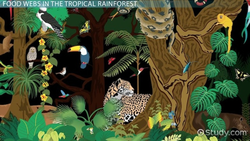 Drawn rainforest rainforest ecosystem Lesson Forest Food Video The