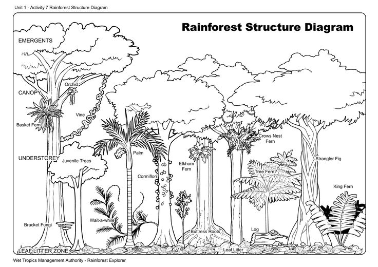 Drawn rainforest rainforest plant Trees of And Rainforest Drawing