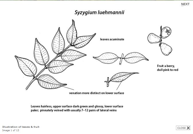 Drawn rainforest rainforest plant Key line Plants drawing of