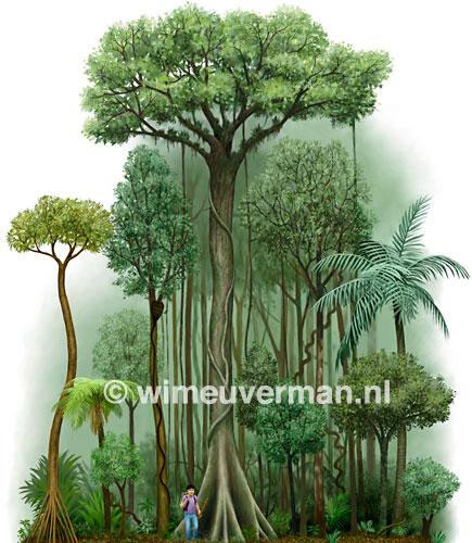 Drawn rainforest rainforest plant Drawings Plants photo#14 Drawings plants