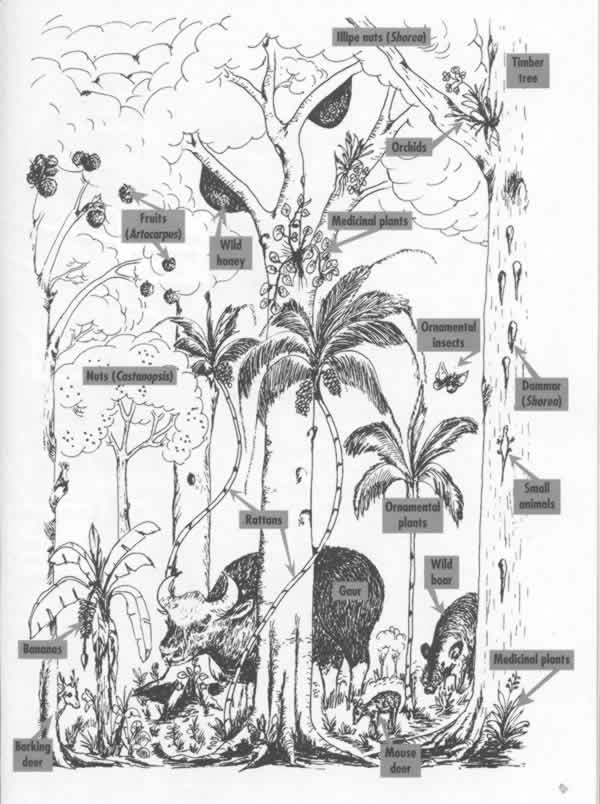 Drawn rainforest rainforest tree Untitled  Document