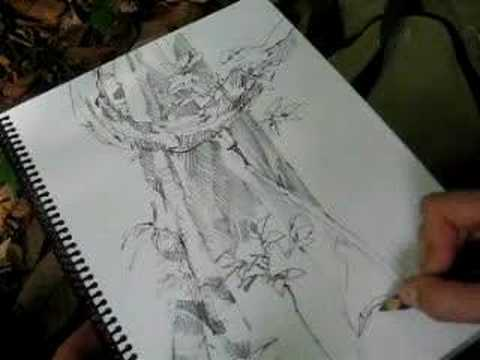 Drawn rainforest rainforest tree Rainforest Drawing A YouTube Tree