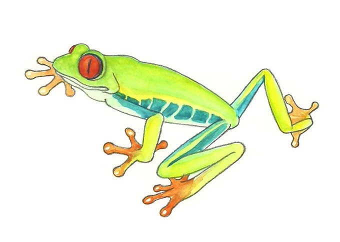 Red Eyed Tree Frog clipart draw a #1