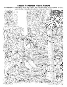 Drawn rainforest realistic To forest Images Bing plants