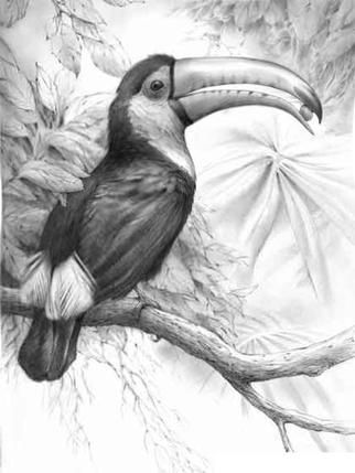 Drawn rainforest realistic Toucan Animal Toucan) Steel The