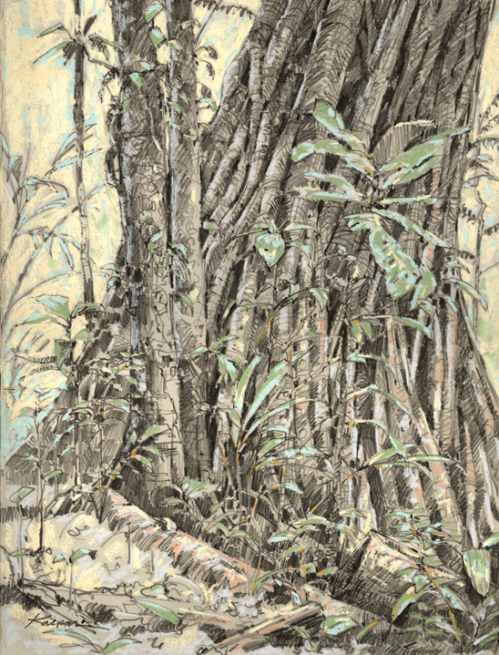 Drawn rainforest strangler fig On in and plein Graphite