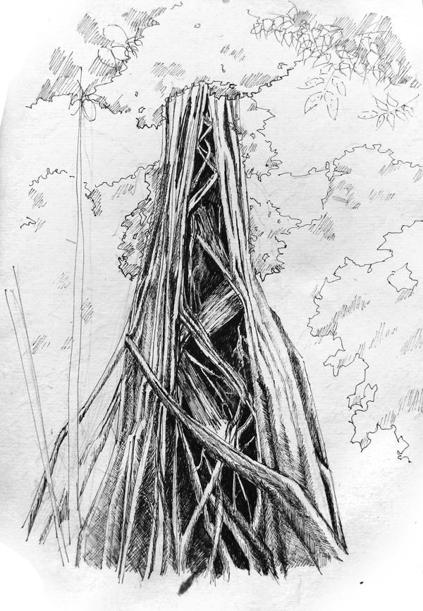 Drawn rainforest strangler fig Tree of Memory The Tower