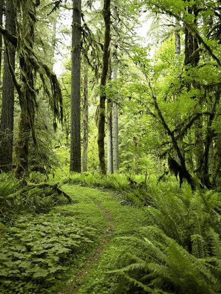 Drawn rainforest temperate rainforest Park National Rainforest Pictures Temperate