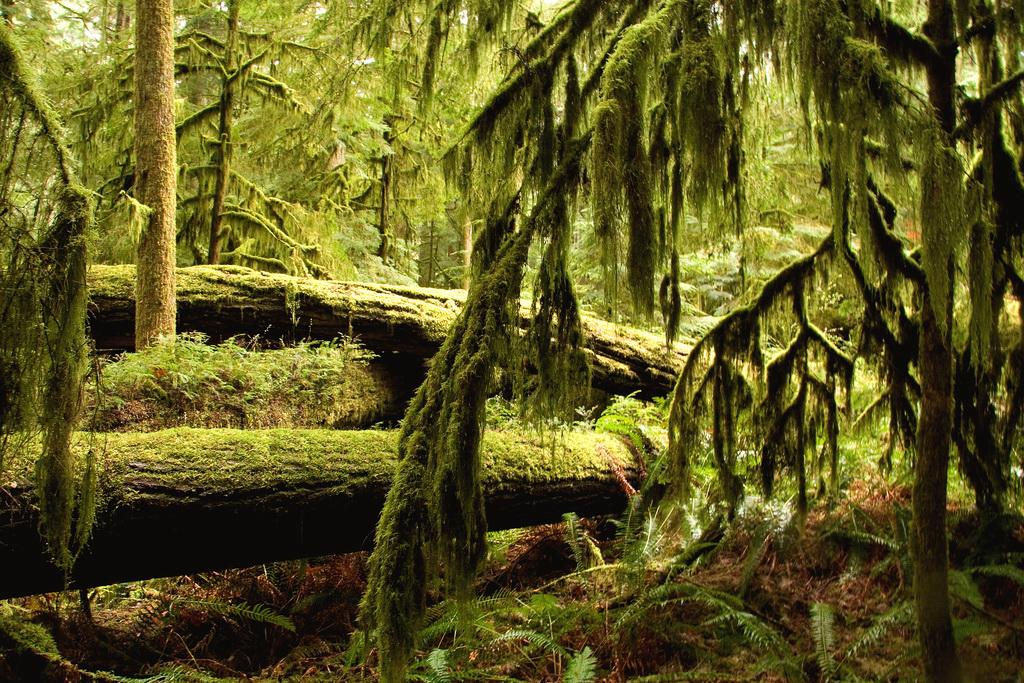 Drawn rainforest temperate rainforest Enlarge) to Ancient Columbia Habitat