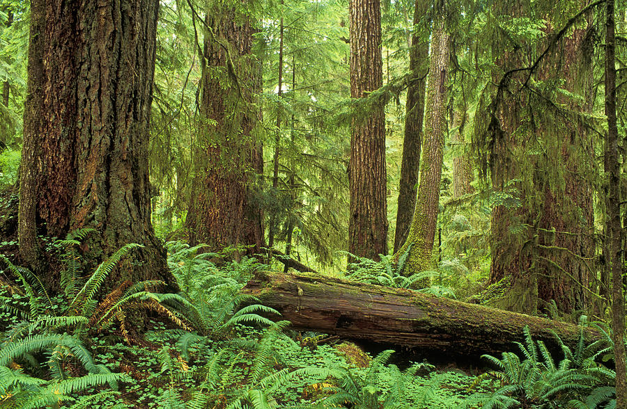 Drawn rainforest temperate rainforest  emaze on science project