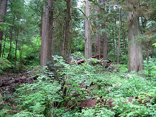 Drawn rainforest temperate rainforest Rainforest Temperate Provincial Park River